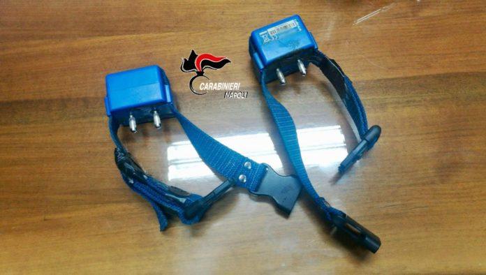 collari elettrici
