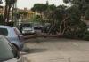 Torre Annunziata albero crollato