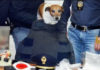 Il cane Pocho