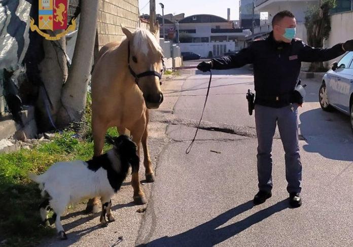 Giugliano capretta e cavallo